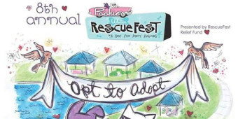 featured pet RAIN slider-rescuefest